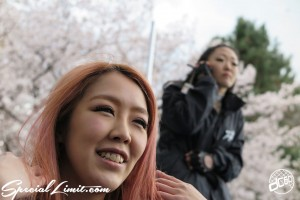 Cherry Blossom flower viewing party meeting Pole Dancers BBQ ICE KURO LISA Hyogo Mukogawa River Park SAKURA