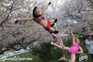Cherry Blossom flower viewing party meeting Pole Dancers BBQ ICE KURO LISA Hyogo Mukogawa River Park SAKURA